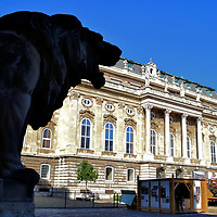 Lion Statue at Inner Court of Buda Castle in Budapest, Hungary <br /> A pair of lions stands vigilant on either side of Lion's Gate. The two guarding Oroszlános Kapu are ferocious. After you pass beneath the ornate archway, however, you are greeted by two friendly lions. Sculptor János Fadrusz created the animals in 1901.