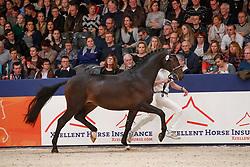 360, King de Niro<br /> KWPN Stallionshow - 's Hertogenbosch 2018<br /> © Hippo Foto - Dirk Caremans<br /> 03/02/2018