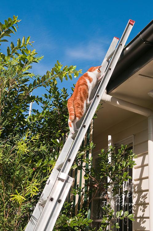 Pet cat climbing ladder