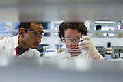 Dr Cesar Tovar and student Barbara Streibl working with cells in the lab at the Menzies Institute for Medical Research.