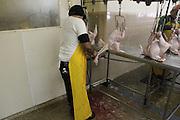 Hamilton, N.J. November 5, 2013. DiPaola Turkey Farm employees slices the neck of a freshly-killed turkey. 11/5/2013. Photo by Jess Scanlon/NYCity Photo Wire