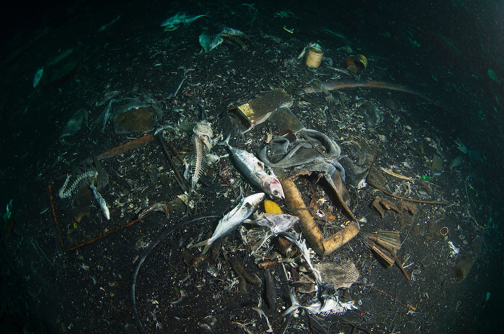 Waste fish, bycatch and rubbish discarded beneath fishing boats, Indonesia.