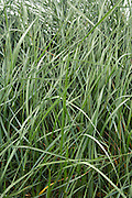 close up of wild grass