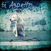 a dog sitting and waiting for someone on a street with graffiti