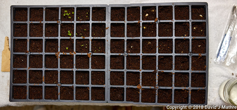 Seedling Tray Day. Composite of two image taken with a Leica CL camera and 23 mm f/2 lens