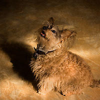 A small dog sitting