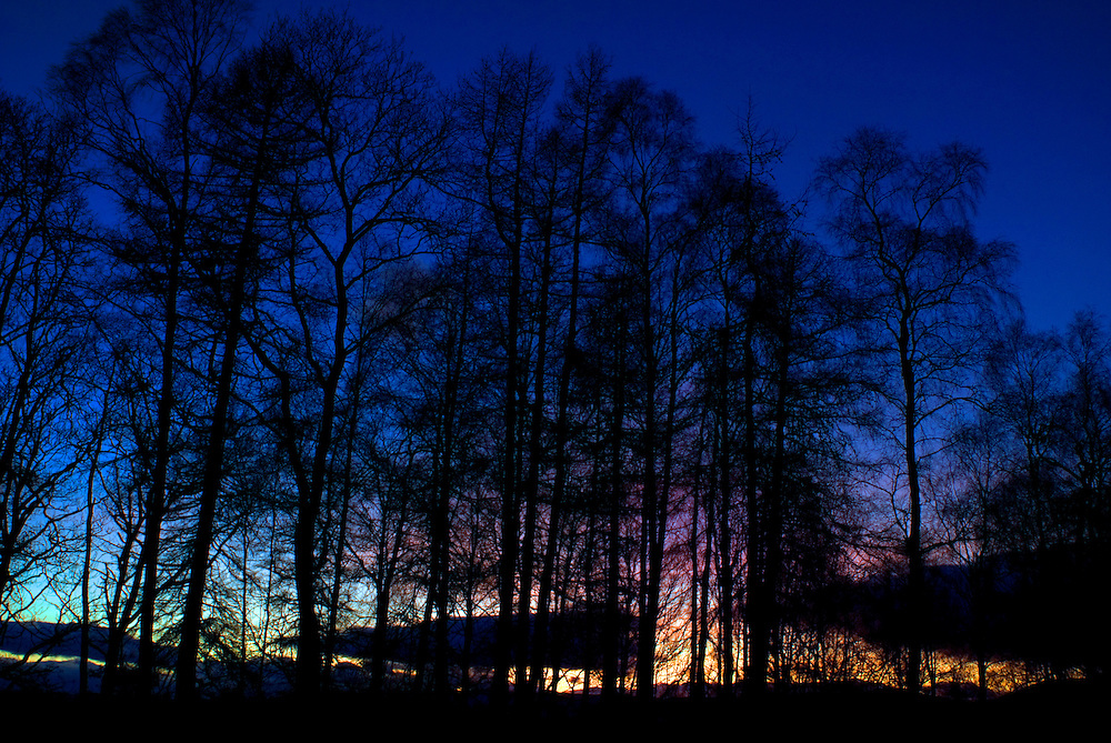 Sunset behind a stand of birch trees silhouetted against a deep blue sky, Perthshire, Scottish Highlands.
