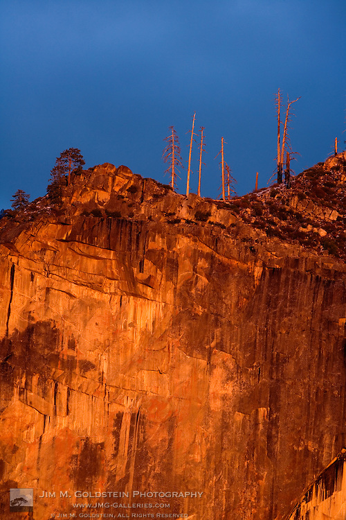 Living and burned trees at the top of a Yosemite valley cliff at sunset - Yosemite National Park, California