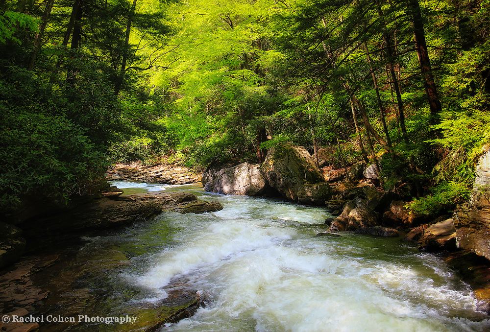 Mid morning sunlight streams through the trees and forest at Meadow Run in Ohiopyle State Park! A beautiful large and rapid flowing stream that leads to the Youghiogheny River!<br />