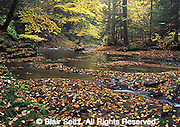 York Co., PA Brook, Fall Foliage Otter Creek,