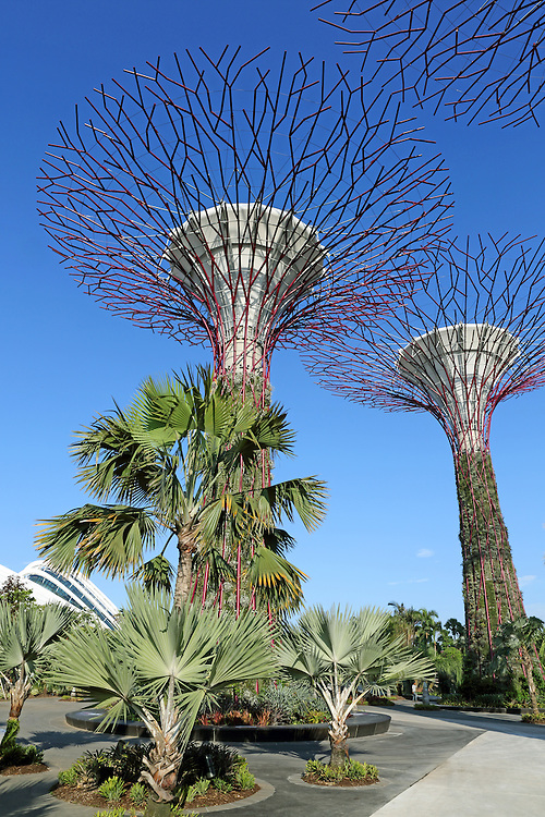 Supertree Grove in Gardens By The Bay. Over 162,900 plants comprising more than 200 species and varieties of bromeliads, orchids, ferns and tropical flowering climbers are planted on the 25-50 metre tall Supertrees.