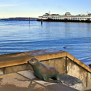 "Bronze sea lion climbing steps from the beach is part of the bronze sculpture installation ""Locals"" by sculptor Georgia Gerber, done in 1989, and a Centennial gift from the Edmonds Arts Festival Foundation. Washington State Ferryboat at dock, Edmonds, Washington"