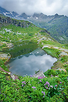 Mother Nature creates one of the Worlds most perfect gardens. National Parc Ecrins, France
