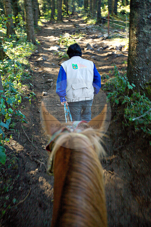 A guide leads a horse 11,000 up the Cerro Chincua mountain at the Monarch Butterfly Biosphere Reserve in Cerro Chincua central Mexican in Michoacan State. Each year hundreds of millions Monarch butterflies mass migrate from the U.S. and Canada to Oyamel fir forests in the volcanic highlands of central Mexico. North American monarchs are the only butterflies that make such a massive journey—up to 3,000 miles (4,828 kilometers).