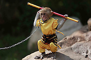 SHENYANG, CHINA - MAY 10: (CHINA OUT) <br /> <br /> Monkey King In Shenyang<br /> <br /> A monkey is dressed up as Monkey King at a park on May 10, 2014 in Shenyang, Liaoning Province of China. The Monkey King, also known as Sun Wukong, is a main character in the Chinese classical novel Journey to the West. People need to pay 20 yuan (3.2 USD) to have a photo with it. <br /> ©Exclusivepix