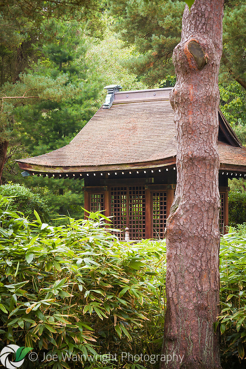 The Shinto Shrine in the Japanese Garden at Tatton Park, photographed in August.