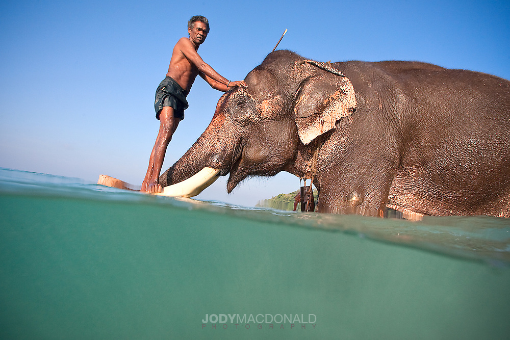 The bond, even deep love between Rajan and his Mahout, or caretaker is something to behold.  Amazing.