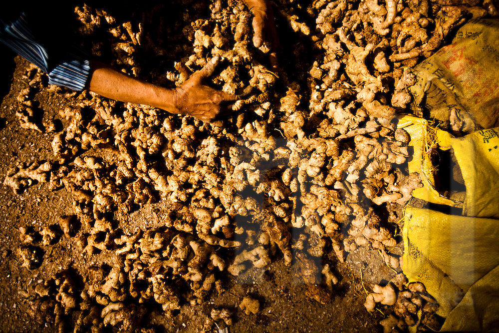 A woman scoops up ginger roots with her hands at an outdoor market in Hanoi, Vietnam, Southeast Asia