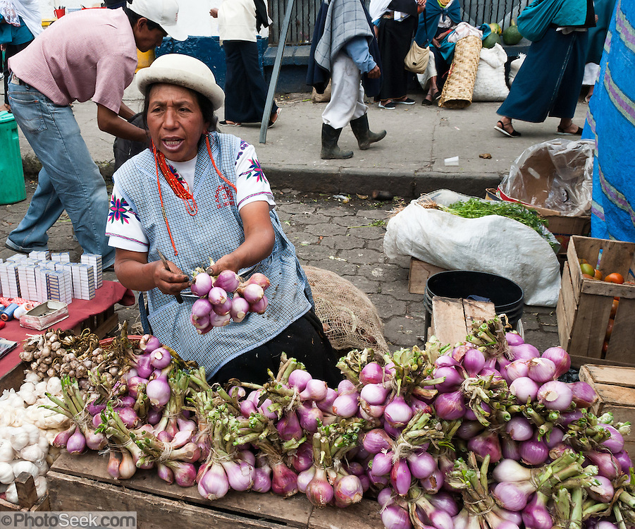 Produce market onion seller, tomatoes, Otavalo, Ecuador, South America. The culturally vibrant town of Otavalo attracts many tourists to a valley of the Imbabura Province of Ecuador, surrounded by the peaks of Imbabura 4,610m, Cotacachi 4,995m, and Mojanda volcanoes. The indigenous Otavaleños are famous for weaving textiles, usually made of wool, which are sold at the famous Saturday market and smaller markets during the rest of the week. The Plaza del Ponchos and many shops tantalize buyers with a wide array of handicrafts. Nearby villages and towns are also famous for particular crafts: Cotacachi, the center of Ecuador's leather industry, is known for its polished calf skins; and San Antonio specializes in wood carving of statues, picture frames and furniture. Otavaliña women traditionally wear distinctive white embroidered blouses, with flared lace sleeves, and black or dark over skirts, with cream or white under skirts. Long hair is tied back with a 3cm band of woven multi colored material, often matching the band which is wound several times around their waists. They usually have many strings of gold beads around their necks, and matching tightly wound long strings of coral beads around each wrist. Men wear white trousers, and dark blue ponchos. Otavalo is also known for its Inca-influenced traditional music (sometimes known as Andean New Age) and musicians who travel around the world.
