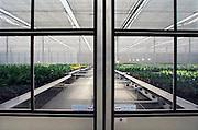 Nederland, Bemmel, 14-7-2006..Huissen. Kas waar met behulp van zonne-energie en speciaal ontwikkelde warmtewisselaars zoveel energie wordt opgewekt dat er een overschot is. Dit wordt opgeslagen in ondergrondse waterbellen. experiment innovatief energiegebruik, duurzame energie. energieoverschot, verwarming van gebouwen of  kassen. Energieproducerende kas, innovatie, hoogwaardige techniek, koude en warmte opslag,  isolatie tuinbouwkas, kastuinbouw, modern. ..Foto: Flip Franssen/Hollandse Hoogte