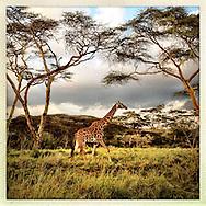 Kenya, October and November 2012