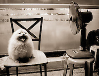 A dog cools off by sitting near a fan in front of a 7-11 in Bangkok, Thailand, Southeast Asia.