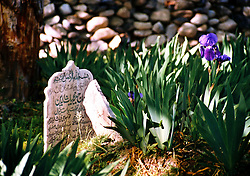 Pakistan, Northwest Frontier Province, 2004. A set of graves is brightened by April irises in a field north of Chitral in Pakistan's NWFP.