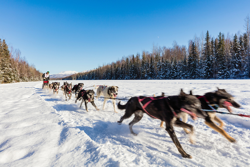 Musher Dennis Kananowicz competing in the Fur Rendezvous World Sled Dog Championships at Campbell Airstrip in Anchorage in Southcentral Alaska. Winter. Afternoon.