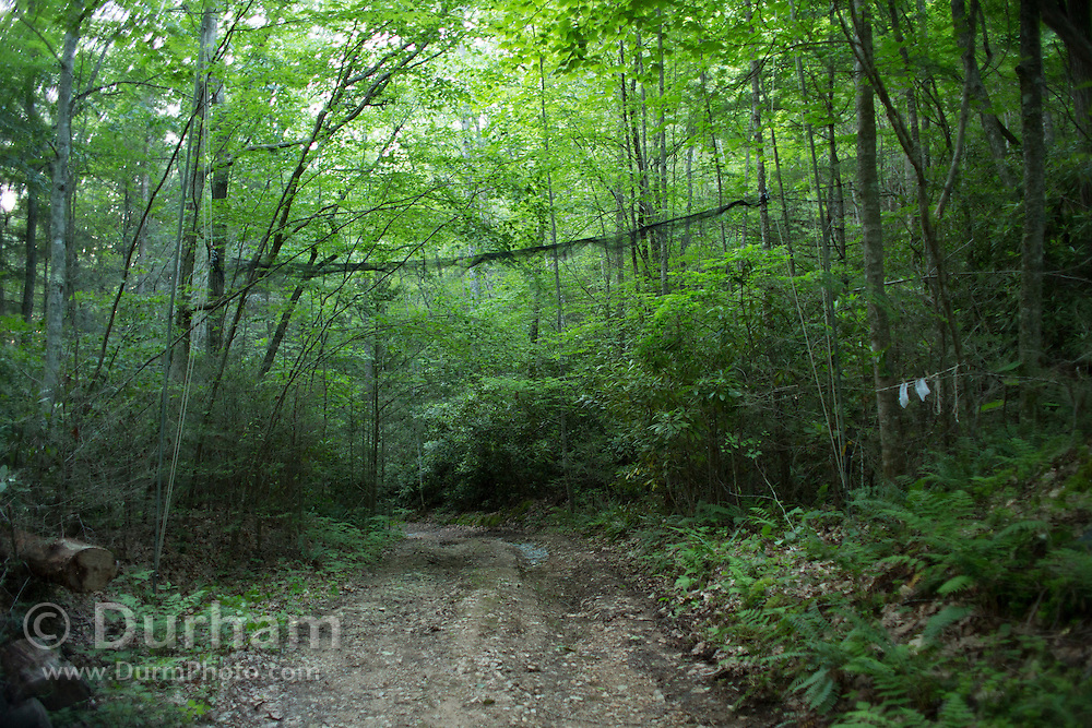 Mist nets being set up over a road for a project to study Indiana bats in the Cherokee National Forest, Tennessee.