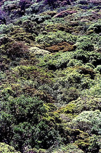 Canopy of Montane Evergreen u0027Sholau0027 forest the type of vegetation unique to the & Forest canopy | Devraj Bandla .V.
