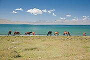 Horses graze by the east shore of lake Song Köl, Kyrgyzstan