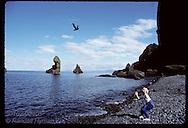 Boy tosses puffin chick into air, releasing it to sea after rescuing it nite before; Heimaey Iceland