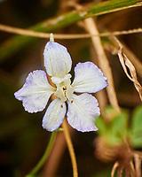 Larkspur (?). Image taken with a Nikon 1V3 camera and 70-300 mm VR lens