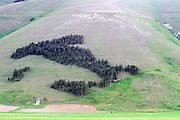 Trees form a map of Italy (The boot) on the hillside above Piano Grande, Umbria, Italy