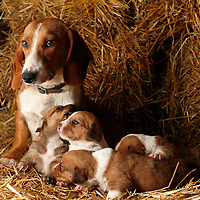 A mother bitch takes care of her puppies, on September 4, 2007. Photo Rafa Rivas