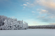 Trees covered with hoarfrost line Clunie Lake in Southcentral Alaska. Winter. Morning.