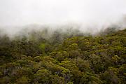 Kokee, forest, Kauai, Hawaii