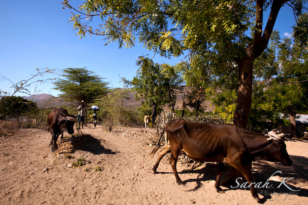 One of the ways some Haitians provide financially for their families is through raising animals to sell the meat. However, with lack of supplement to feed their cattle, they cannot get much meat from them.