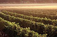 Peconic Bay Winery, 31320 Main Road  Cutchogue, NY