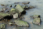 rock with algae