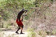 Africa, Tanzania, Lake Eyasi, Hadza man hunts with bow and arrows Small tribe of hunter gatherers AKA Hadzabe tribe