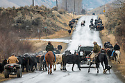 Moving cattle to winter pasture. Salmon, Idaho.