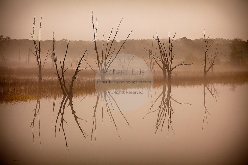 Morning fog reflects dead trees in a swamp near Gardeners Corner, SC