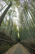 Chikurin-no-Michi or the Path of Bamboo is long path of bamboo trees in Arashiyama behind Tenryuji Temple. The scene appears frequently on Japanese TV dramas and in Japanese movies,particularly those set in Kyoto.