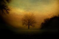 Lisa Johnston   lisa@aeternus.com   Tiwtter: @aeternusphoto  Lone tree among the sycamores in Pennyslvania.