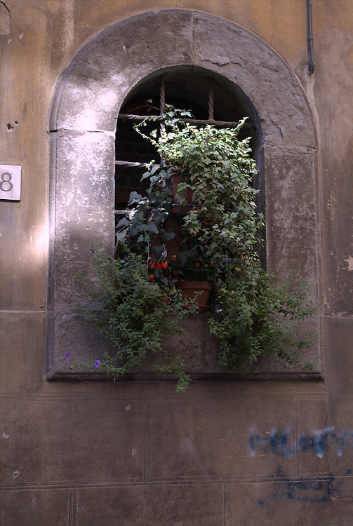 Plants in window of old building in Rome, Italy