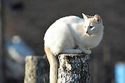 A cat on a post in Gutierrez, Santa Cruz, Bolivia