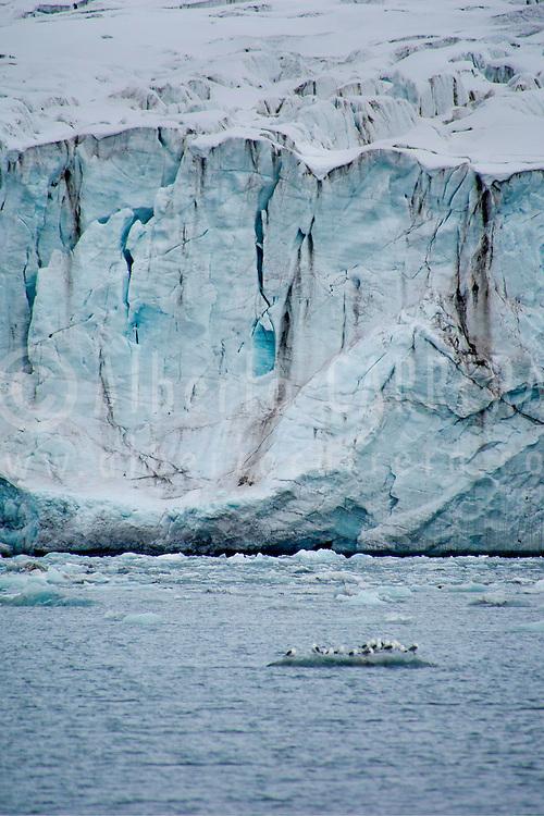 Alberto Carrera, Arctic Lands, Glaocus Gull, Larus hyperboreus, Glacier Ice, Ice Floes, Glacier near Ny-Alesund, Kongsfjord, Kings Bay, Oscar II Land, Arctic, Spitsbergen, Svalbard, Norway, Europe
