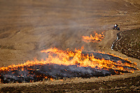 A worker rides along the edge of a field on an ATV Monday as he sets fire to grass left over from last year's harvest in preparation for planting.