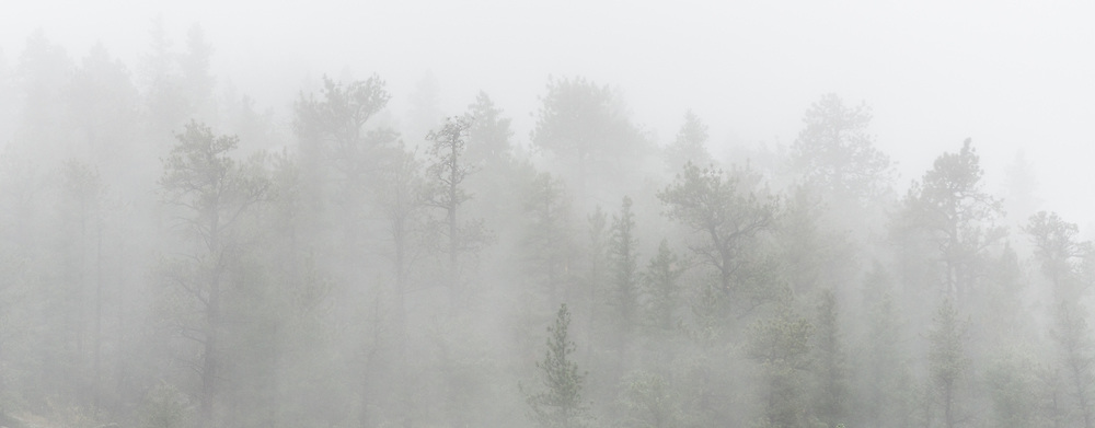 A picture of some trees hiding in the fog in the mountains near Rocky Mountain National Park.